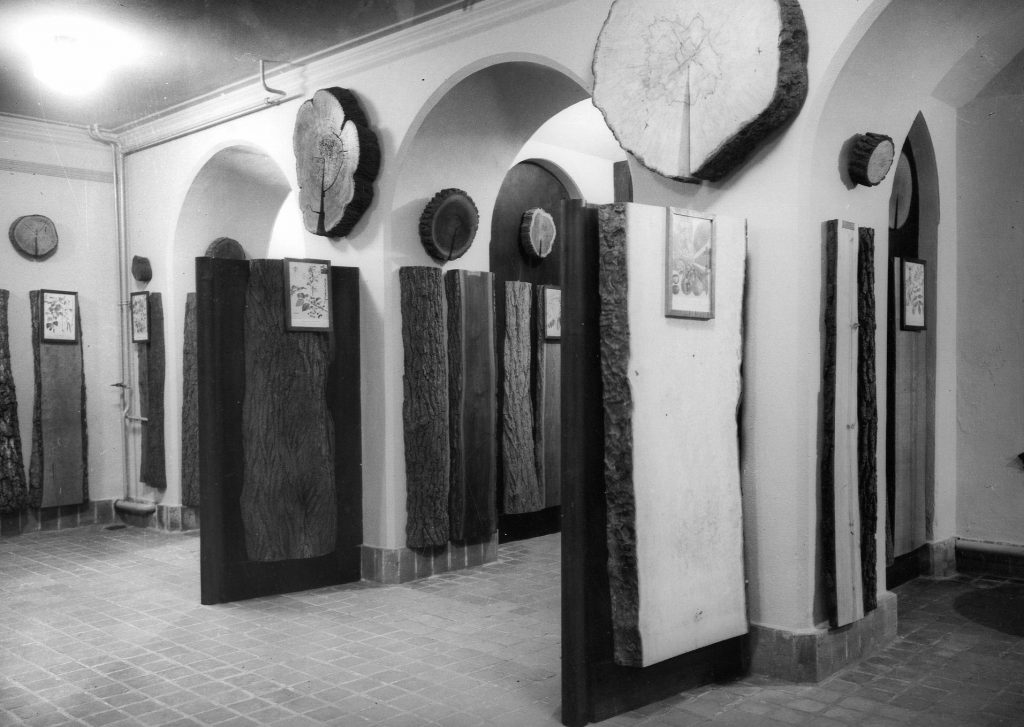 oude foto museum Staatsbosbeheer